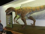 Lifesize dinosaur model
